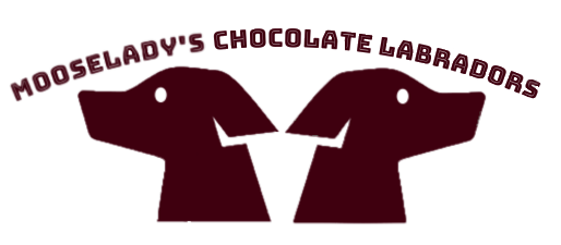 MooseLady's Chocolate Labradors